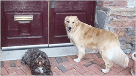 A pair of dogs in front of a burgundy door.
